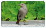 Vogelsprache, die Sprache der Natur