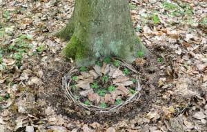 Naturkunst und Landart Wurzeltrapp Wildnisschule