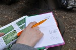 Einfühung Pflanzenbestimmung
