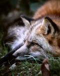 Wildnispädagogische Naturerkundung auf der Spessartfährte