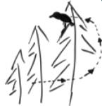 Vogelsprache Haken