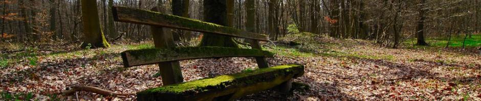 Digital Detox Wurzeltrapp Wildnisschule Natur Kurse zum digitalen Entgiften