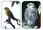 Vögel Schnabelform Vögel Vogelsprache Wurzeltrapp Wildnisschule