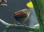 """Im Sprache der Natur Kurs erlernst du die """"Vogelsprache"""" Wurzeltrapp Wildnisschule"""