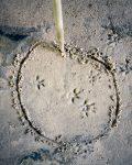 Wildlife Tracker Ausbildung Fährtenlesen lernen Spurenlesen lernen