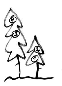 Vogelnester im Nadelbaum :: Wurzeltrapp Wildnisschule