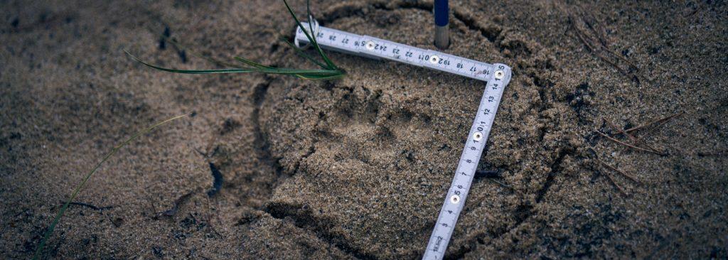 Fokustage für Fährtenleser - Ein Tag, ein Wildtier - Wurzeltrapp Wildnisschule